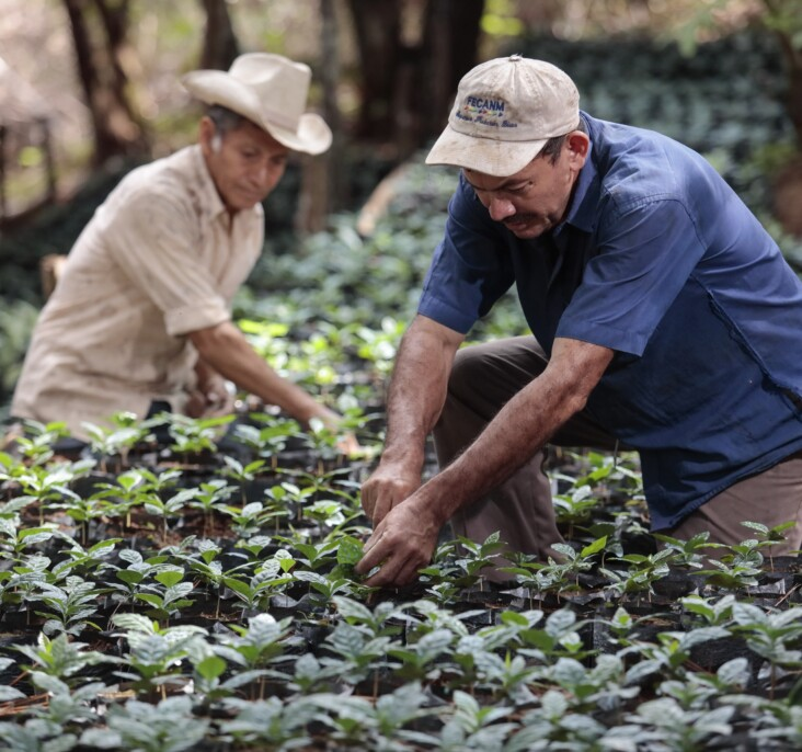 Older farmers in the greens